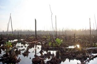 Plantation and logging firms have been blamed for the destruction of forest like this peat swamp in Riau. (Bloomberg Photo/Dimas Ardian)