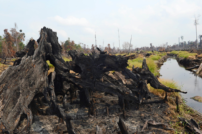 The Forestry Ministry says a new law will aid law-enforcement efforts to protect forests from destruction, but critics lament that it fails to address key issues, such as indigenous rights and forest fires. (AFP Photo)