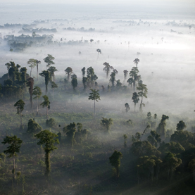 Giant blazes clear forests to make room for oil palm plantations in Indonesia.Image: ROBERT NICKELSBERG Getty Images
