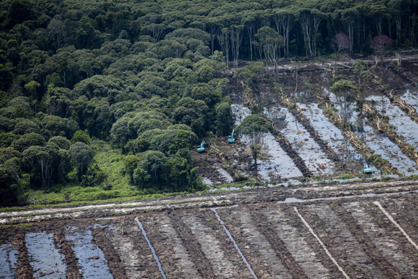 Peatland forest clearance for palm oil
