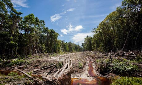 An access road under construction in forest being cleared for a palm oil plantation in Sumatra. Photograph: Chaideer Mahyuddin/AFP/Getty Images