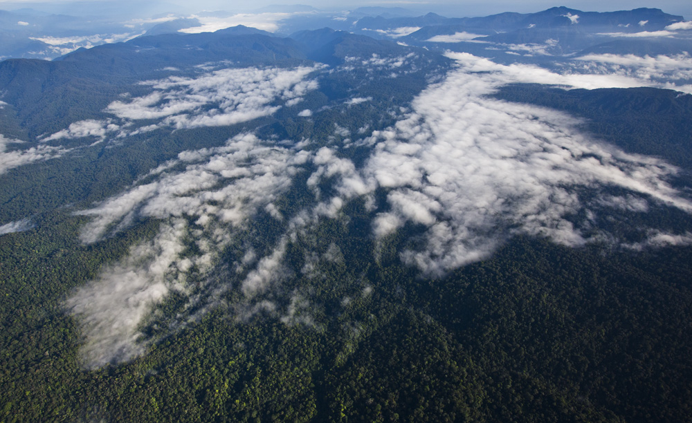 The Leuser Ecosystem (photo by Paul Hilton)