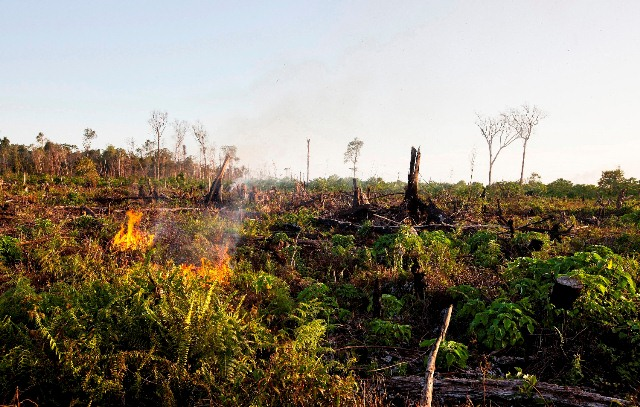 Photo of Tripa rainforest fire in 2012 courtesy of the Sumatran Orangutan Conservation Program (SOCP).