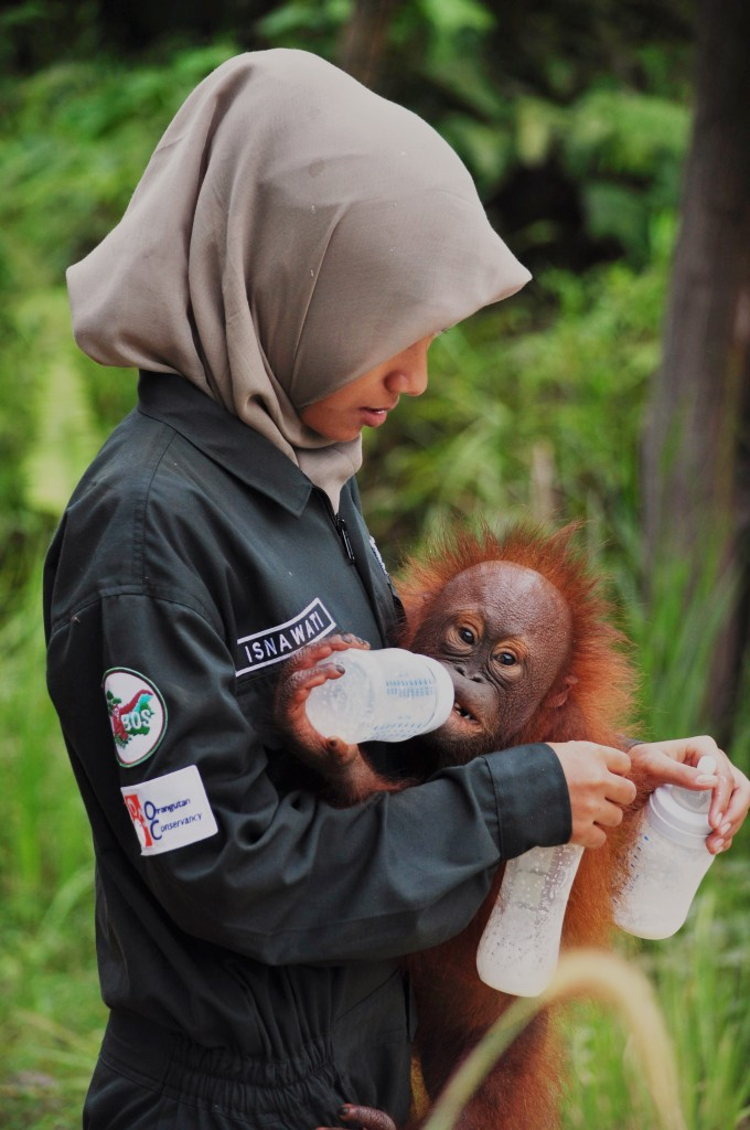 OC photo of Samboja Lestari rescue center