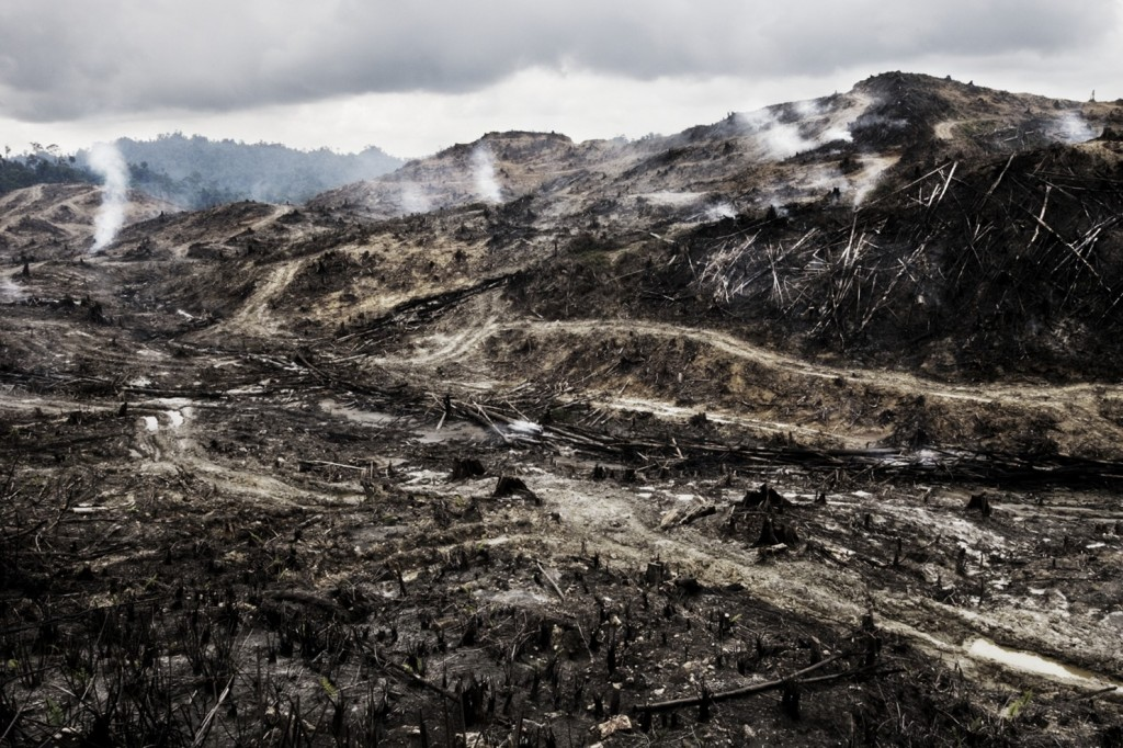 To make way for an oil palm plantation, land in Sarawak, Malaysian Borneo, is stripped of trees, then burned. (Mattias Klum/Tierra Grande AB)